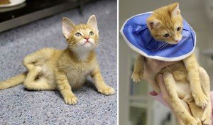 Stockings: A Cat With Twisted Legs Gets A Happy Ending
