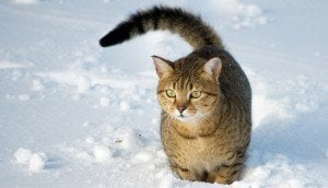 Hypothermia In Cats: Symptoms And What To Do