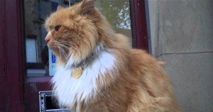 Scotland town raises $8,000 to commemorate beloved stray cat