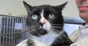 """Surrendered """"smelly cat"""" finally finds new home"""