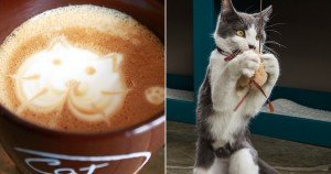 "America's first ""cat café"" takes NYC by storm"