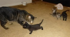 Blind cat helps give kittens a second chance