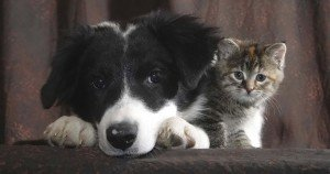 Proposed Illinois bill would put rescue pets at risk