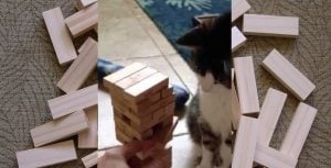 Adorable Cat Is The King Of Jenga [VIDEO]