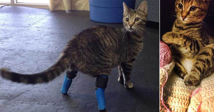 "Boots with a pair of temporary prosthetics, jokingly called ""house slippers"" (left); the feline without prosthetics (right)."