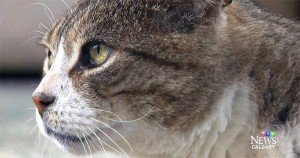 Cat with unusual name returns home one year after epic flood