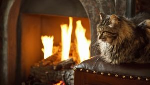 Pet Fire Safety: Candles, Fires, Space Heaters – Tips To Keep Your Cat Safe