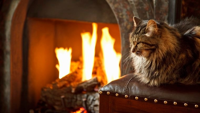 Long haired cat in front of lit fire