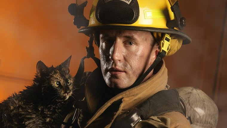 Firefighter and a cat