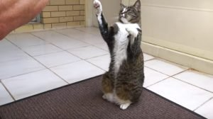 Cat Training: Can Cats Really Learn Tricks And Commands?