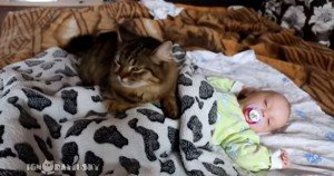 Cat Snuggles With Human Baby [VIDEO]
