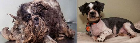 Pictures Of A Dogs Injured Neck After Grooming