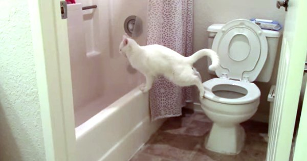 One More Reason Your Cat Should Not Use The Toilet Video