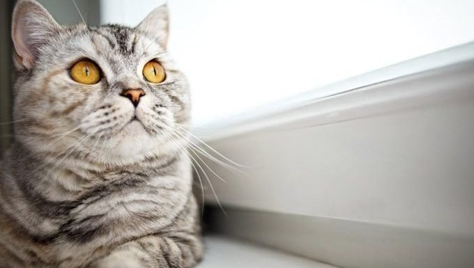 cat with yellow eyes looks out window, thinking of famous quotes about cats
