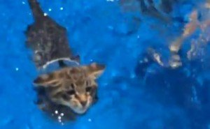 Who Says Cats Hate Water?