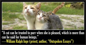 50 Famous Quotes About Cats