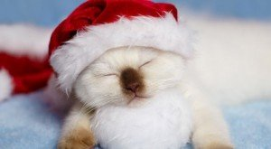 20 Cats Posing For Their Christmas Cards [PICTURES]