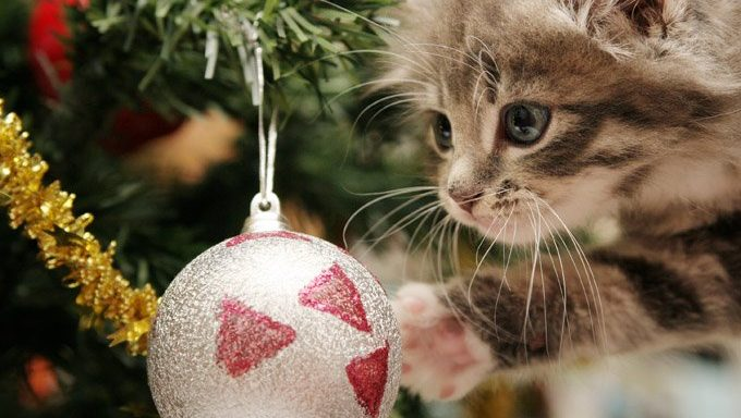 kitten reaches for ornament