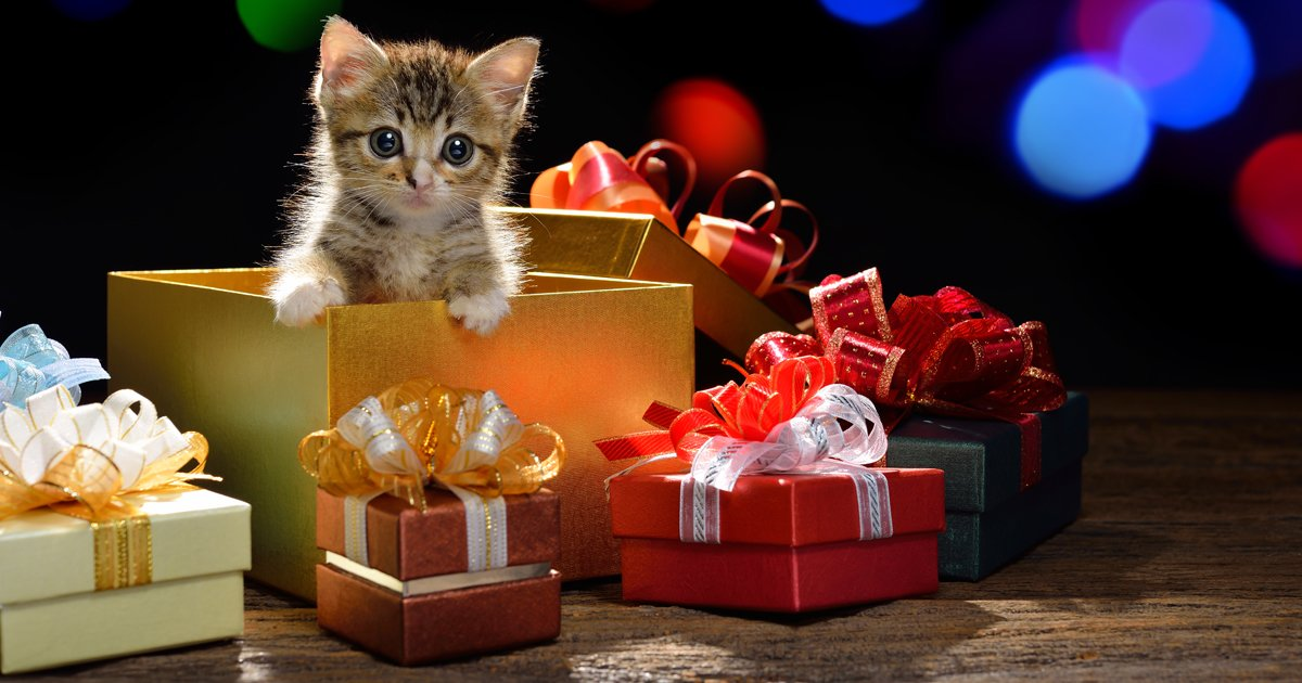 CatTime's 2014 Holiday Gift Guide - CatTime