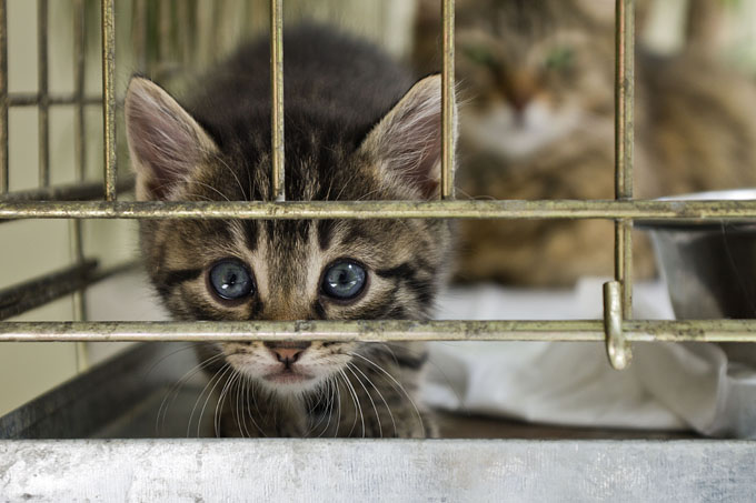 "Despite the ""No Kill"" designation, shelters are permitted to euthanize a percentage of their animals. (Picture Credit: Getty Images)"