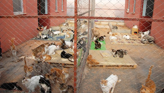 cats in a shelter on world spay day
