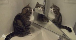 Cats And Mirrors Are Hilarious [VIDEO]