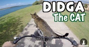 Didga the cat's radical biking adventure