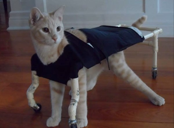 costumes for cat