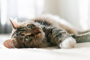 Cats and Cat Scratch Disease