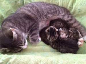 Happy Mother's Day: 3 Mama Cats Who Set Examples For Us All