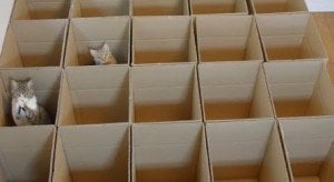Kitty Box Maze