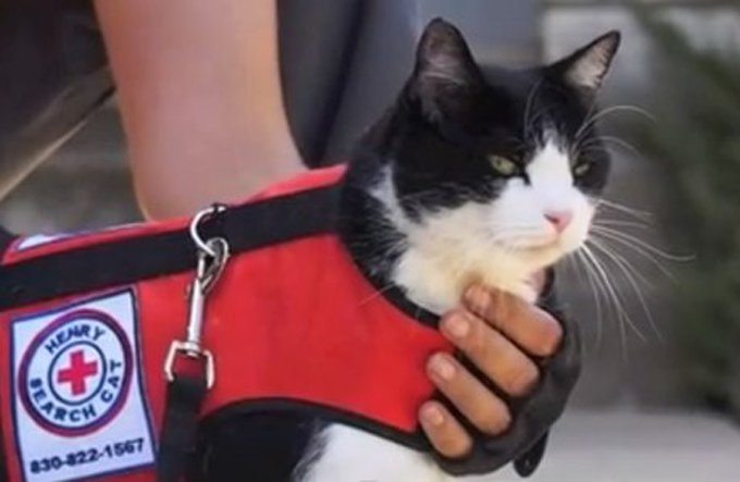 Henry may be the world's only search and rescue cat. (Photo Credit: Henry & Kim)