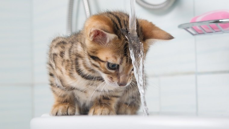 small kitten, first acquaintance with water, and washing your hair