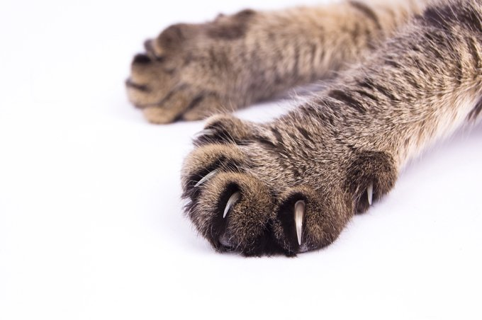 Clip, Cap, or Claw Your Cat\'s Paws - CatTime