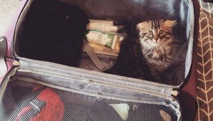 41 Pics Of Cats Hiding In Your Luggage [GALLERY]
