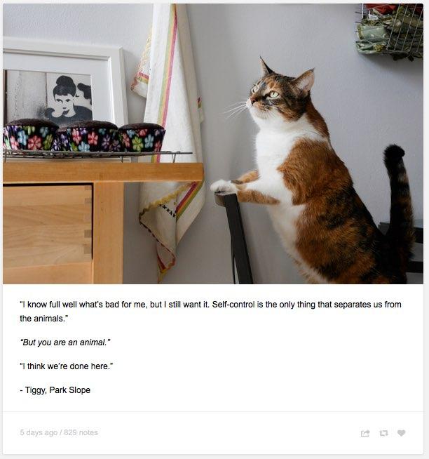 """Felines Of New York — """"I know full well what's bad for me, but I still..."""