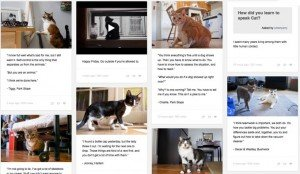 "Why Felines Of New York Blog Is Absolutely ""Pawesome"""