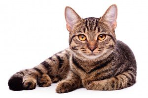 The Cat Handshake: How To Introduce Yourself To A New Cat