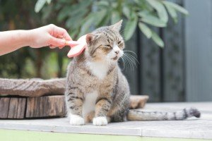 Why Has My Cat Stopped Grooming Herself?