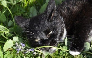 Why Do Cats Go Crazy For Catnip?