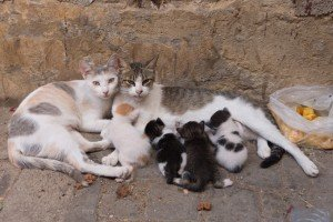 Los Angeles Has Three MILLION Feral Cats: What Can We Do?