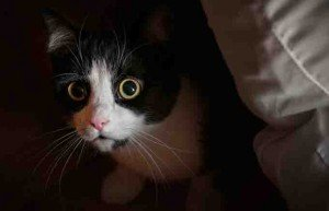 6 Surprising Causes Of Separation Anxiety In Cats