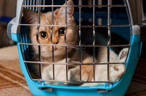 How To Choose The Best Cat Carrier For Your Cat