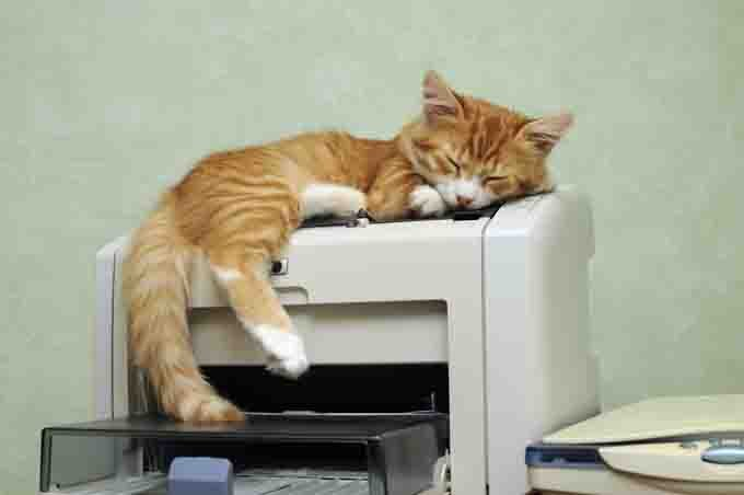 Cat sleeping on top of office printer.