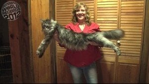 Who Is the World's Biggest Cat?
