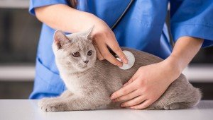 Awesome Cat Health Tips For National Pet Wellness Month