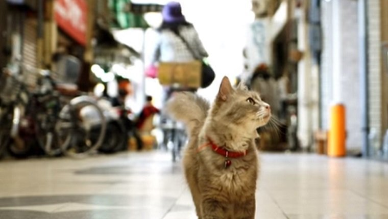 A cat stands on a sidewalk in Japan looking around as a woman on a bike rides past.
