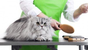 How To Care For A Long-Haired Cat