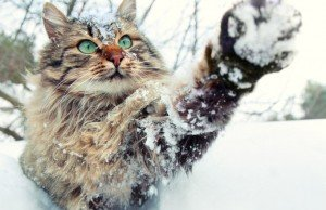 Ways To Keep Outdoor Cats Safe In The Winter