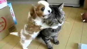 Puppy Loves Hugging His Cat Friend